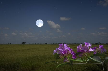 Beautiful violet flower in moonlight of night