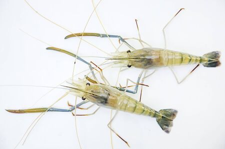Top view of giant freshwater prawns on white floor