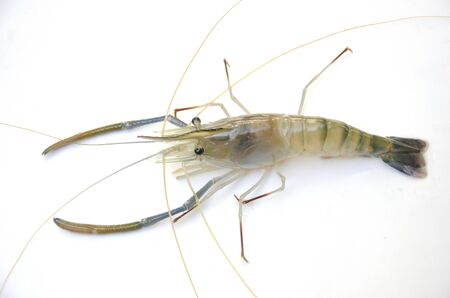Details of giant freshwater prawn closeup