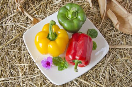 Beautiful sweet peppers in white ceramic dish