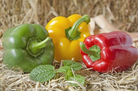 Beautiful bell peppers on straw floor Imagens