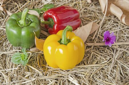 Beautiful colored bell peppers on straw floor Imagens