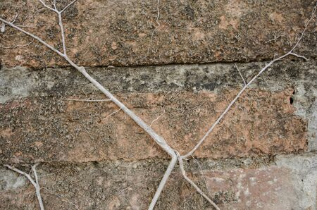 Art of roots and dried moss on brick wall