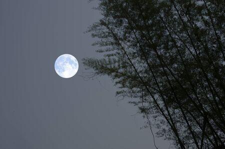 Bamboo trees and beautiful full moon