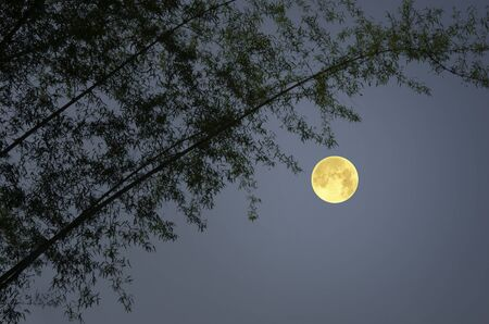 Beautiful full moon with bamboo trees Banco de Imagens