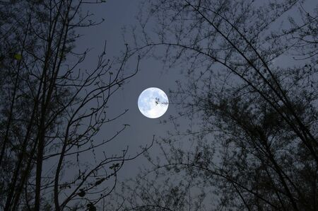 Beautiful full moon in bamboo forest
