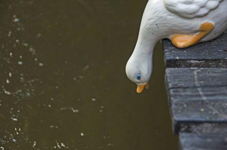 White duck on black bridge look at water below Banco de Imagens