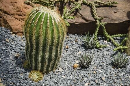 Beautiful cactus and aloe trees in little rocks Banco de Imagens