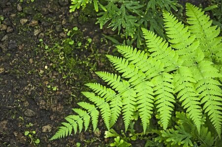 Vivid green leaves of fern and moss in the wild