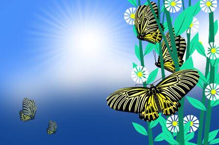 Beautiful birdwing butterflies with white flowers Imagens - 134394214