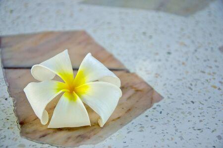 White and yellow plumeria flower on marble floor Imagens - 134478147