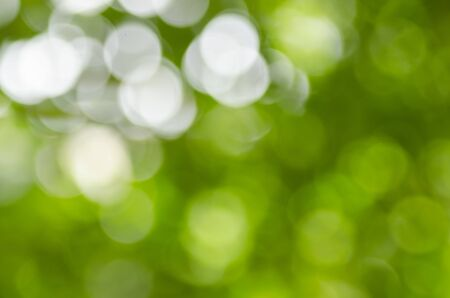 Beautiful green tone of bokeh lights through leaves