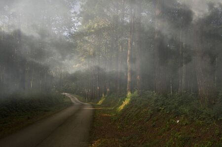 Road and coniferous forest in thick morning fog