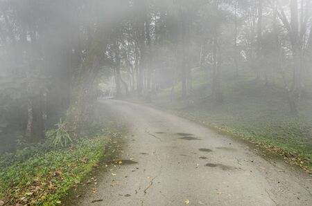 Long road and forest on mountain in morning fog Imagens