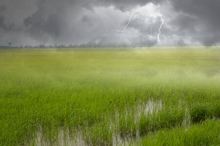 Rainy and thunder storm over green rice field in Thailand