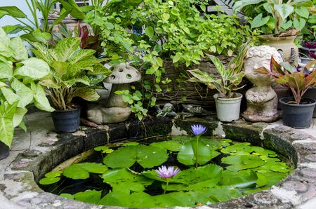 Small pond of water lily with ornament plants