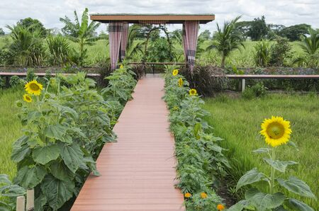 Brown wooden bridge with sunflowers to pavilion in farm
