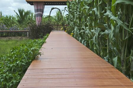 Long wooden bridge with corn background to pavilion