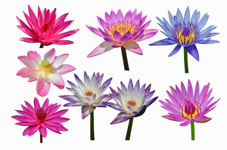 Beautiful lotus and water lily flower collection on white background