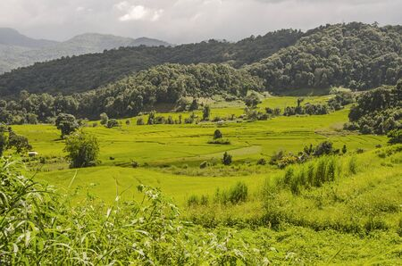 Green rice field in near the mountain in Thailand