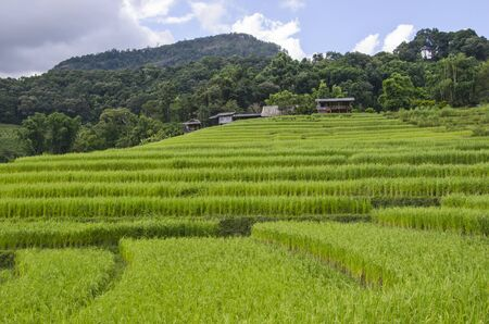 Beautiful green rice terrace near the mountains