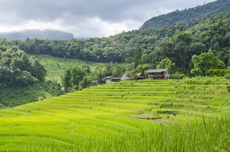 Beautiful green rice terraces and old houses in mountain hug