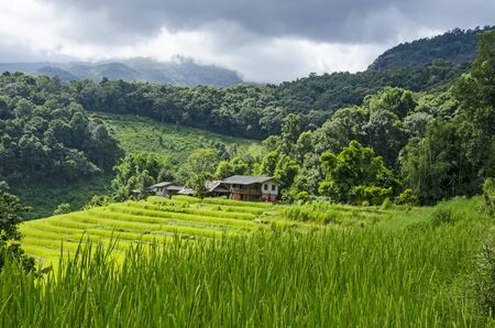 Green rice terraces and old houses in mountain hug