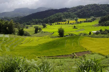 Beautiful colored of rice terrace in the valley