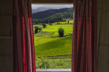 Beautiful green and yellow rice field in the window Imagens