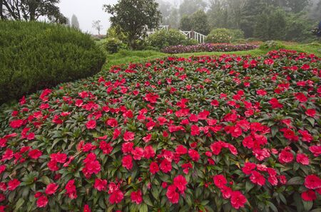 Beautiful red flowers of impatiens garden on the hill