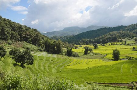 Green and yellow rice terrace in the valley and mountains