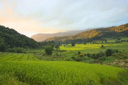 Rice terrace and morning light on the mountain Imagens