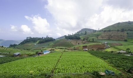 Beautiful green garden of tribal on the mountains Stock Photo
