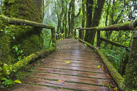 Beautiful green moss on old trees and wooden bridge in forest Stockfoto
