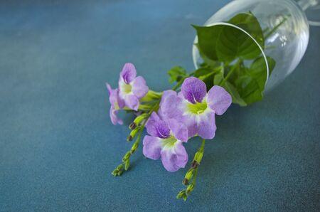 Flat lay image of brazilian snapdragon vase on blue floor