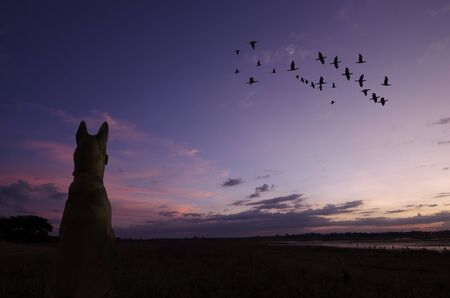 Lonely dog watches flying birds in the evening
