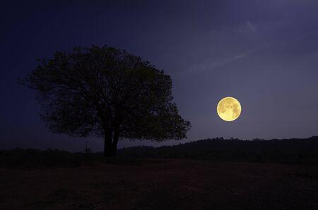 Grand arbre solitaire sur la colline dans la nuit de pleine lune Banque d'images