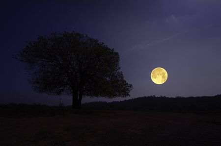 Lonely big tree on the hill in full moon night