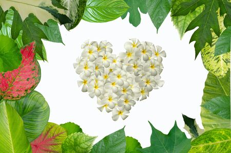 Beautiful green leaf border and flower heart on white background Stock Photo