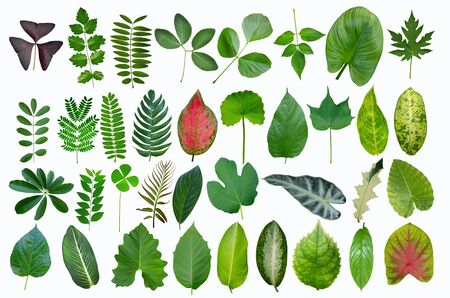Beautiful tropical leaf collection on white background