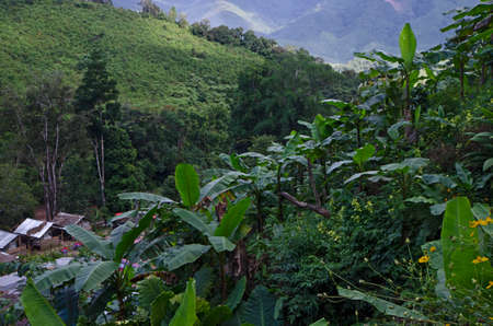 Banana forest on the mountain with village below Imagens