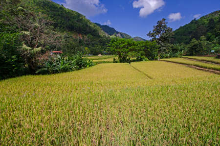 Beautiful rice field in the valley in Thailand Imagens