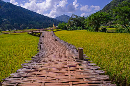 Long woven bamboo bridge and gold rice field in the valley Imagens
