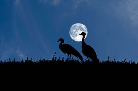 Couple crane in grass field with beautiful full moon sky