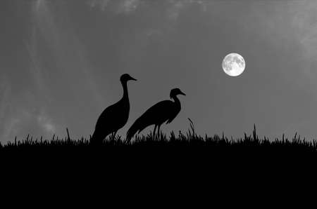 Couple crane in grass field in the full moon night