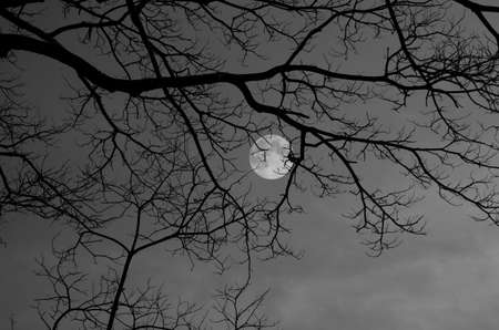 Black and white image of branches and full moon Imagens