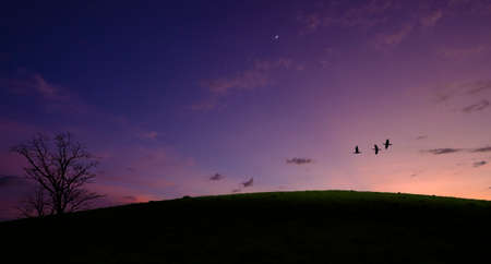 Flying birds in evening sky over grass hill