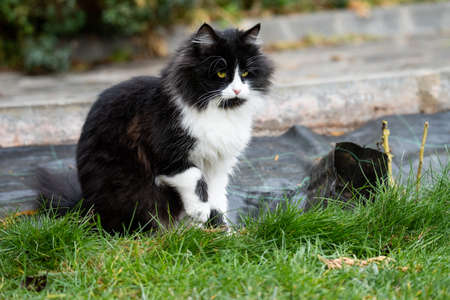 Adorable cute cat sitting in the garden on the green grass