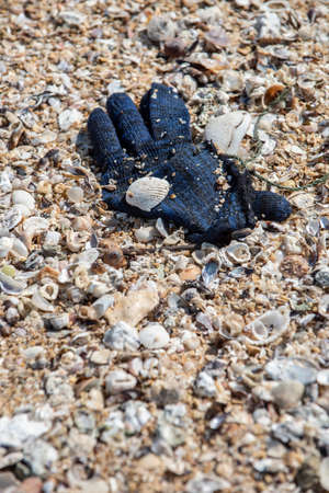 A deep blue winter yarn glove found trashed on the beach surrounded with sea shells. Reklamní fotografie
