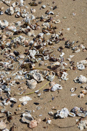Plastic wires found left on the beach surrounded with sea shells. A starting point of the environment problem.